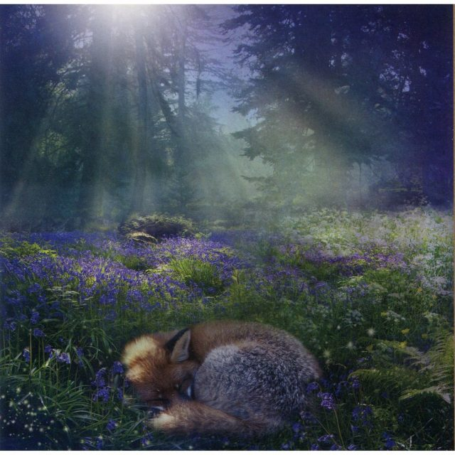 Healing Light Online Psychic Readings and Merchandise Blue Bell dawn Blank Greeting Card by Angie Latham