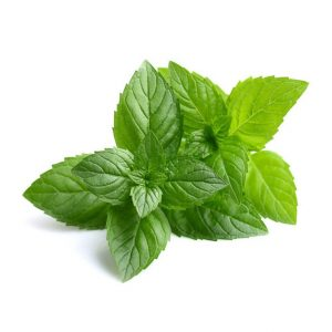 Healing Light Online Psychic Readings and Merchandise organic Peppermint Essential Oil by Oils4life