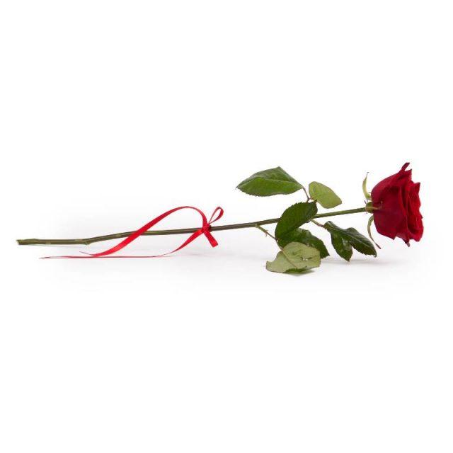 Healing Light Online Psychic Readings and Merchandise Rose Oil Fragrance Oil